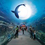 تصاویر مرکز خرید دبی مال امارات