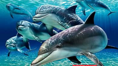 Photo of پارک دلفین های کیش اولین دلفیناریوم ایران با آدرس و تصاویر