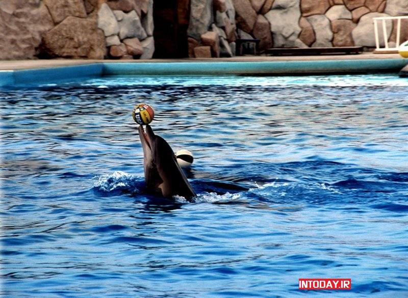 تصاویر پارک دلفین های کیش