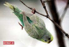 تصویر از باغ پرندگان مشهد