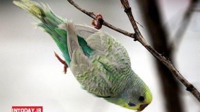 عکس باغ پرندگان مشهد
