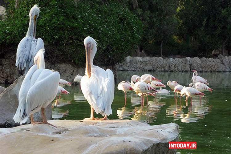 عکس باغ پرندگان کیش