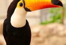 تصویر از باغ پرندگان کیش