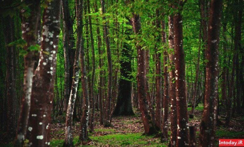 جنگل سیسنگان