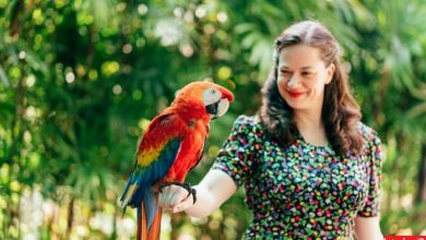 Photo of باغ پرندگان کوالالامپور بزرگ ترین باغ پرندگان دنیا
