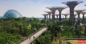 باغ های بای د بی سنگاپور | gardens by the bay singapore