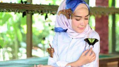 پارک پروانه کمنو بالی