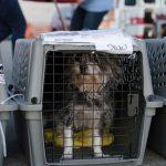 قوانین حمل حیوانات خانگی در هواپیما