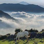 فیلبند مازندران | Filband