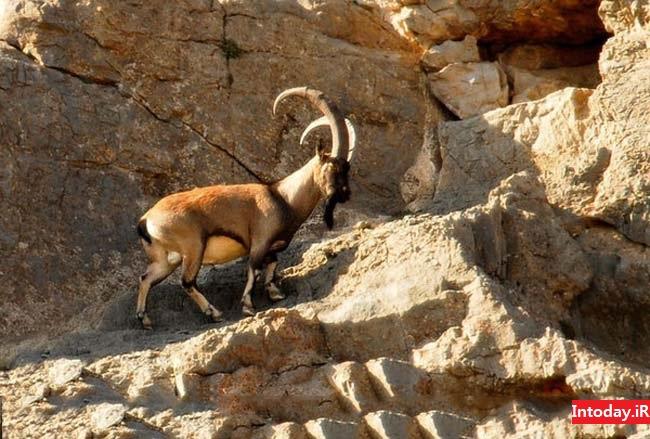 بندر گواتر چابهار - Gulf GoaTer
