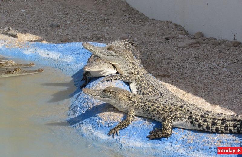پارک کروکودیل قشم نوپک | Qeshm Crocodile Park