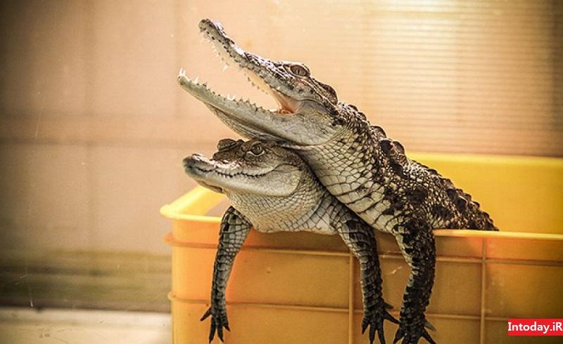باغ خزندگان اصفهان - reptiles garden