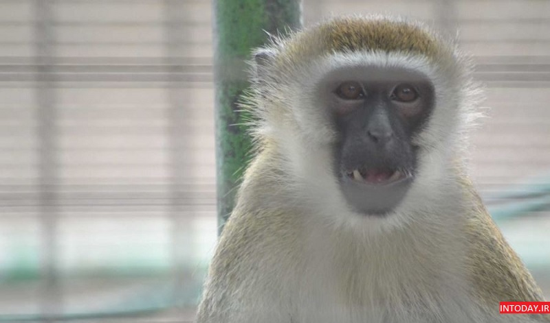 تصاویر باغ وحش دبی - Dubai Zoo
