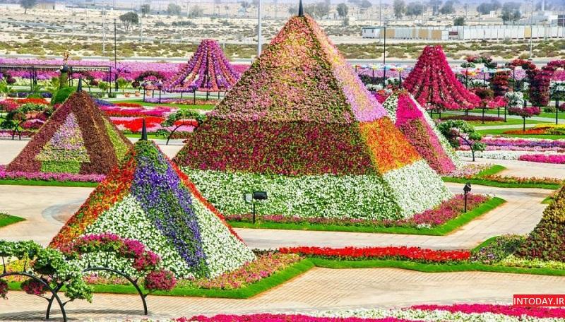 باغ گل میراکل گاردن دبی - Miracle Garden