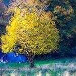 عکس جنگل النگدره گرگان