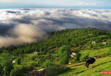 تصویر از راهنمای سفر به روستای مازیچال