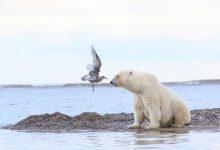 تصویر از فرود در دهان خرس
