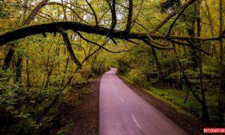 تصاویر پارک جنگلی نور مازندران