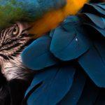 عکس پرنده مکائو در کالیفرنیا