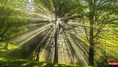 تصویر از جنگل دالخالی بهترین جاذبه گردشگری رامسر | آدرس