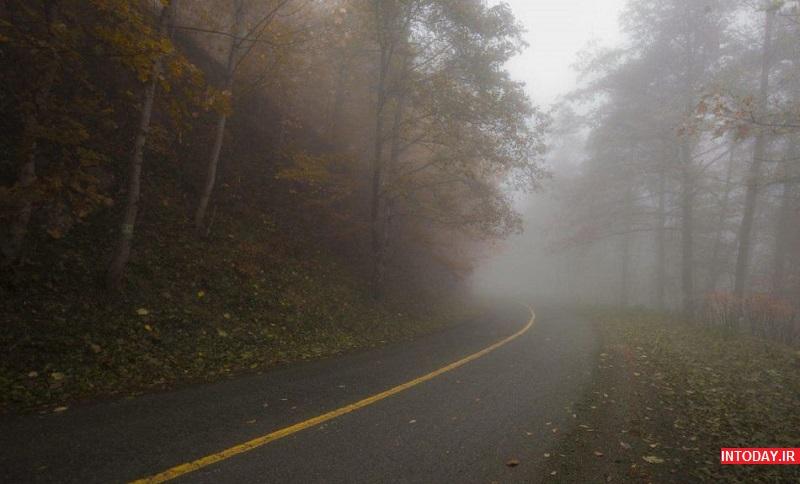 تصاویر جنگل دالخالی رامسر