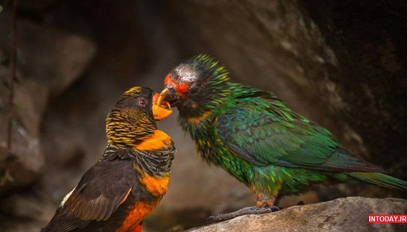 تصویر از باغ پرندگان تهران کجاست؟
