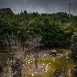 تصاویر باغ پرندگان تهران