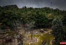 تصویر از باغ پرندگان تهران