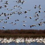 تصاویر تالاب میانکاله مازندران