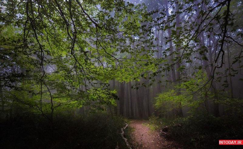 تصاویر جنگل الیمستان آمل