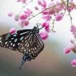 تصاویر پارک پروانه مالزی