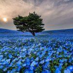 تصاویر پارک هیتاچی ژاپن