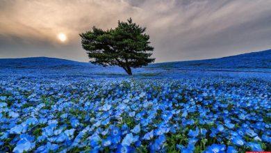 Photo of پارک هیتاچی ژاپن زیباترین پارک جهان | آدرس و تصاویر