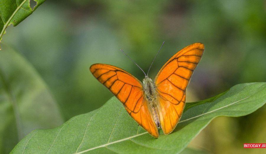 عکس پارک پروانه کوالالامپور