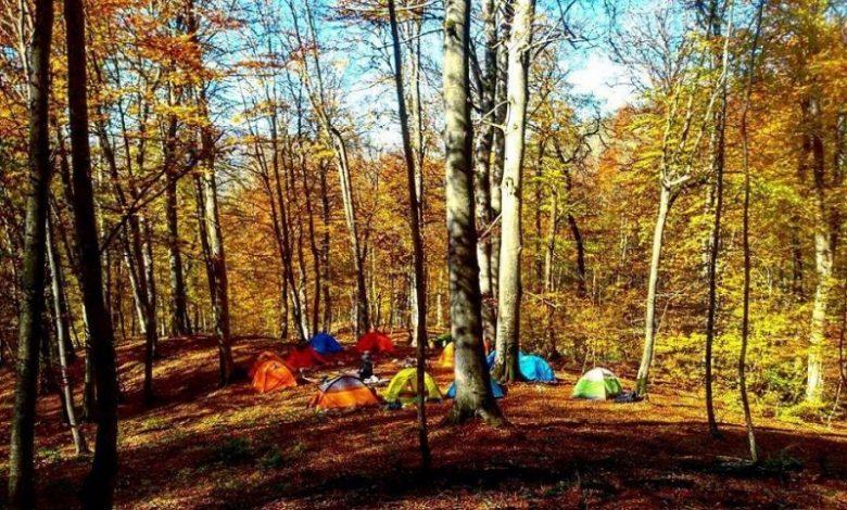 کمپ در جنگل راش سوادکوه مازندران