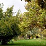 تصاویر بهترین پارک های شیراز