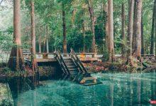 تصویر از پارک ملی جینی اسپرینگ استیت فلوریدا | آدرس و راهنما