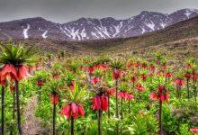 تصویر از گلستان کوه خوانسار