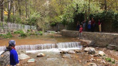 Photo of آبشار کلوگان شمیرانات با 40 متر ارتفاع | راهنما
