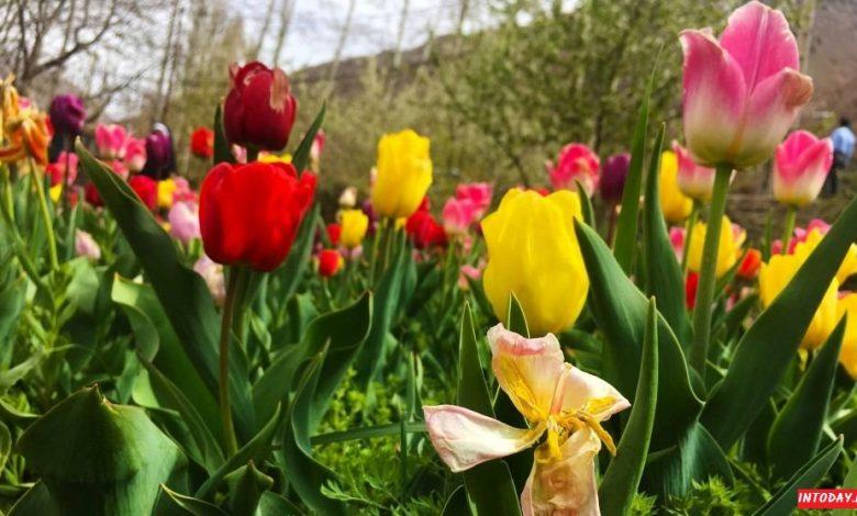 باغ لاله گچسر