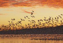 تصویر از همه چیز درباره پرنده نگری یا پرنده بینی با راهنما