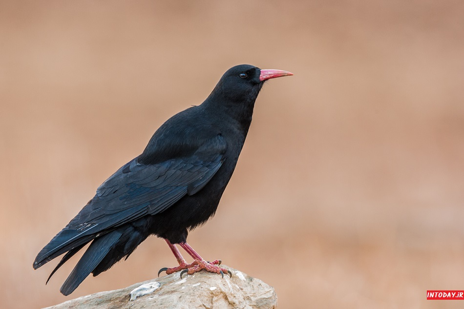 دانستنی های لازم درباره پرنده نگری