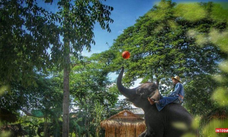 دهکده فیل پاتایا