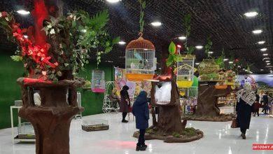 تصویر از پارک نوازش تبریز با گونه های اهلی و وحشی   عکس و راهنما