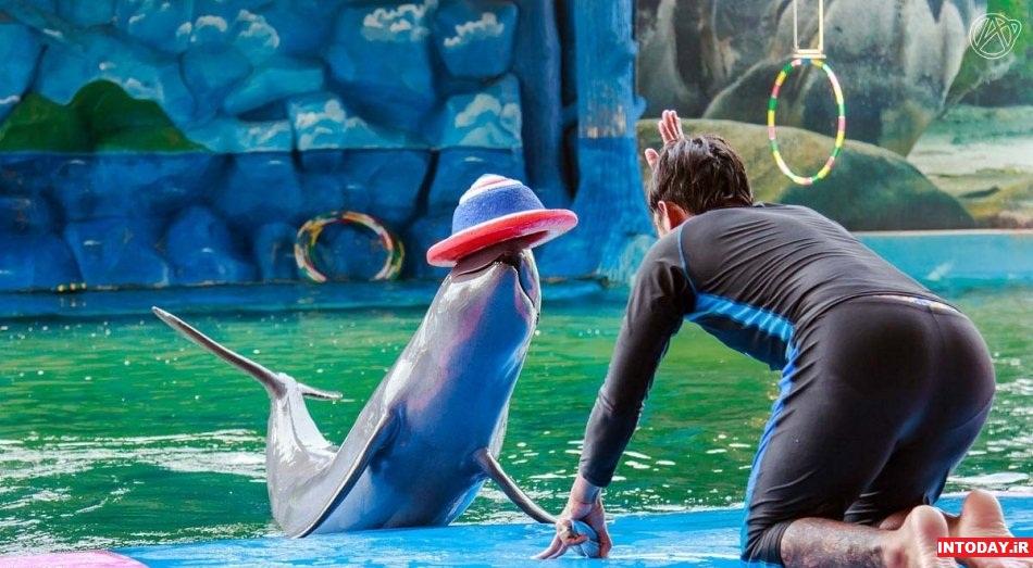 دلفین ورد پاتایا