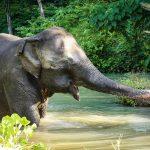 پناهگاه فیل ها پوکت
