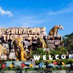 باغ وحش ببرهای سریراچا پاتایا