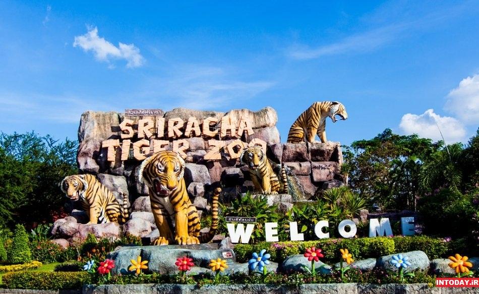 Photo of باغ وحش ببرهای سریراچا پاتایا | راهنما و تصاویر