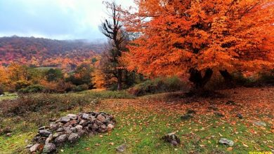 Photo of جنگل توسکستان گلستان با رنگ های متنوع | راهنما