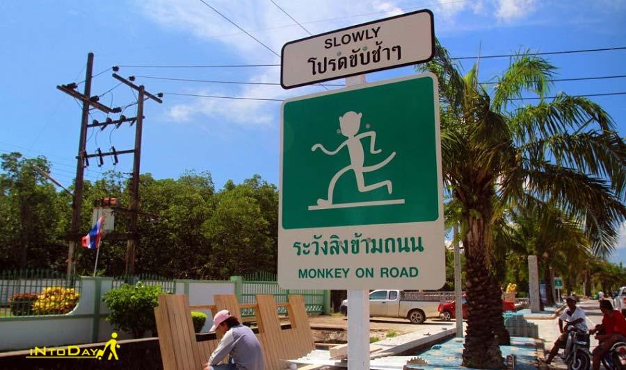 تپه میمون پوکت